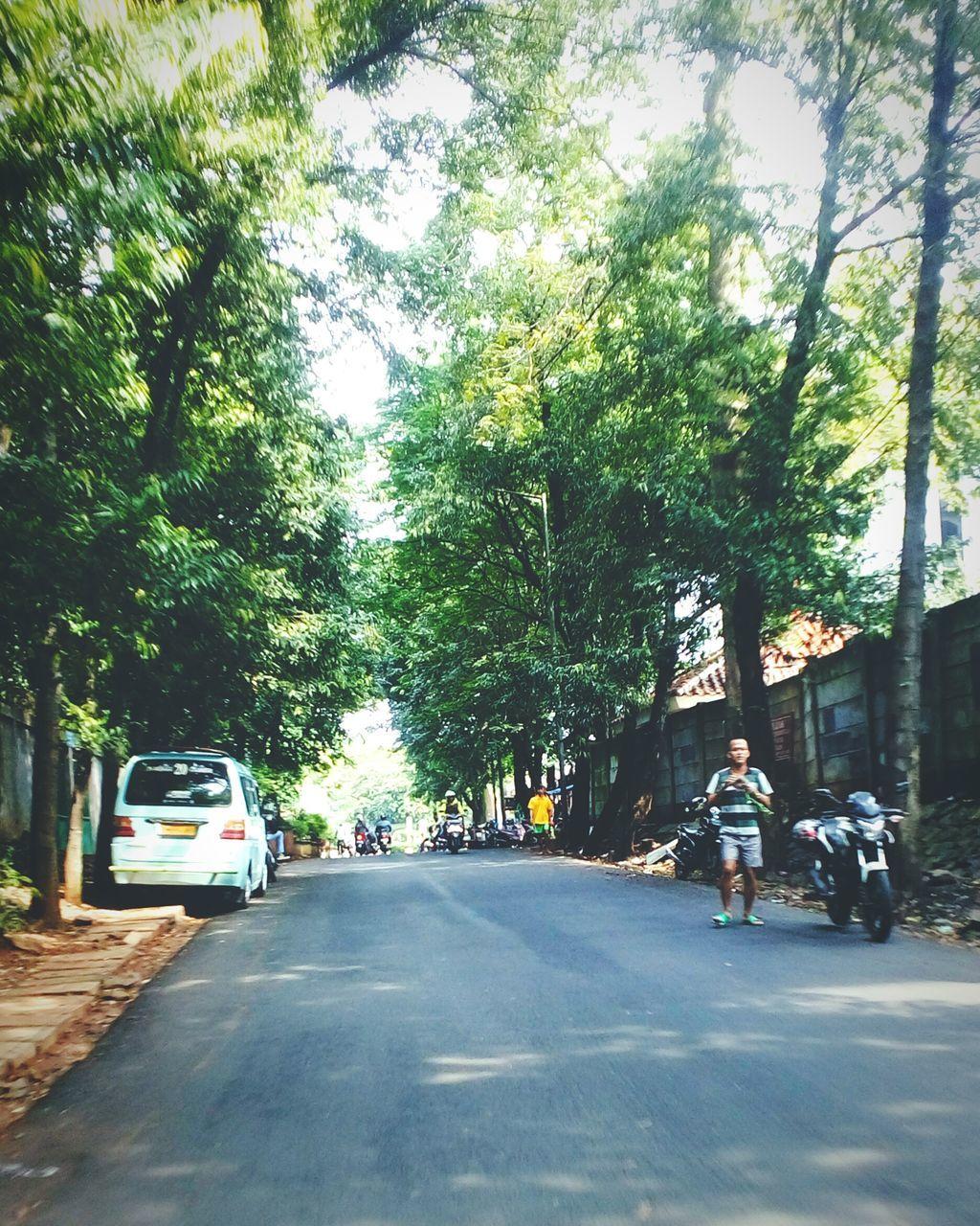 Long Empty Road Along Trees