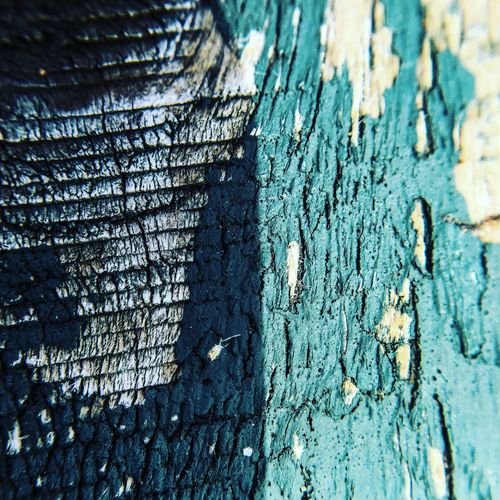Colourful driftwood. Gambo Pond Gambo Newfoundland Iphonography Driftwood Beach Shot On IPhone 6s