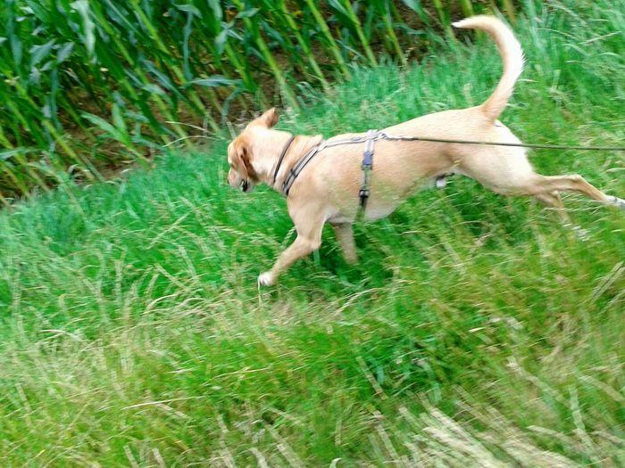 Hunderunde Adventure Club Dog Sport Nature On Your Doorstep EyeEm Nature Lover EyeEm Outdoors Enjoying Life Unterwegsunddraußen Spazieren Und Fotografieren