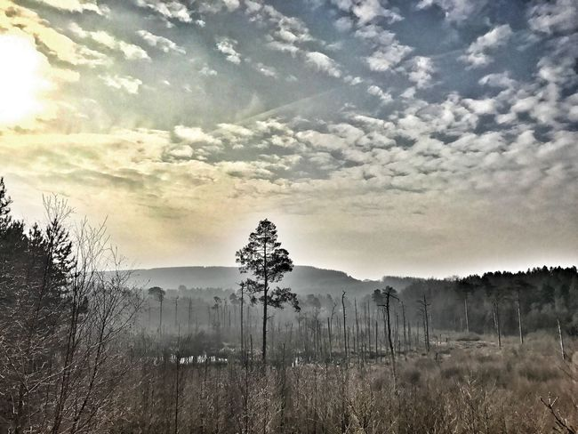 Nature Tree Sky Beauty In Nature No People Tranquility Growth Tranquil Scene Scenics Landscape Outdoors Cloud - Sky Grass Day Mountain Delamere Beauty In Nature