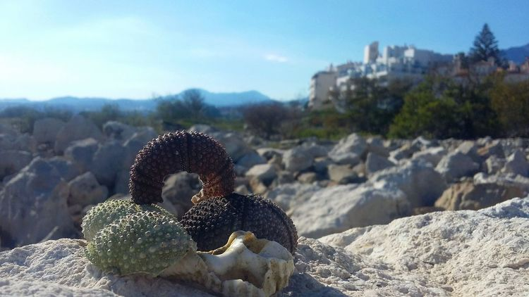Coralstone Coral Sea Life Rocks View SPAIN Photoart Shells Tranquility Rocky Beach Gallery Imagination Peaceful Collection Popular New Market