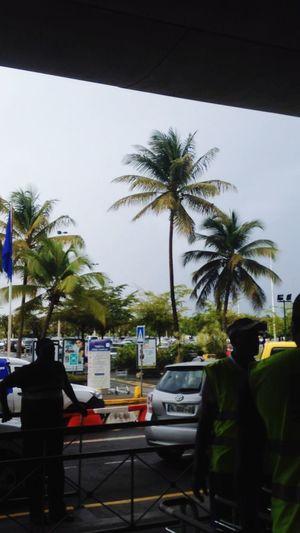 Sortir de l'aéroport et tomber sur une mutlitude de palmiers >>>>>