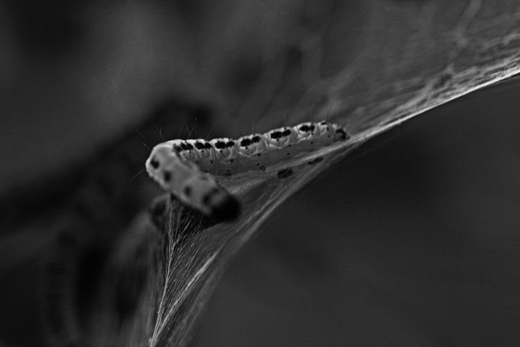 Close-up of caterpillar on spider web