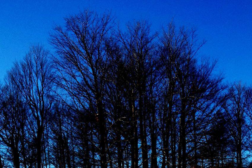 Learn & Shoot: After Dark Nightphotography Tree And Sky Night Trees Beautiful Night Sky Darkness And Light Darkness Dark Blue Sky ☁
