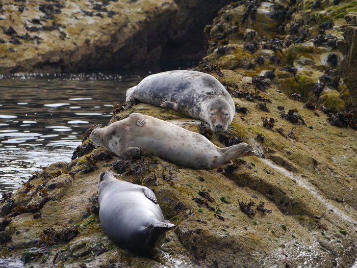 View of seals relaxing on coast