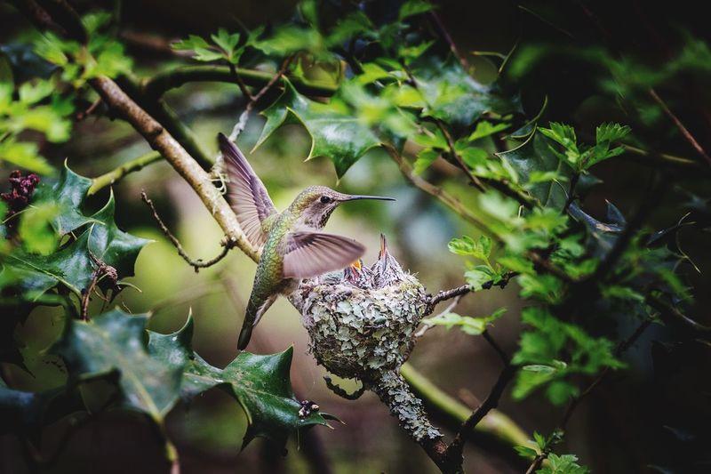 Close-up of bird on plant
