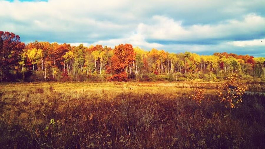 The EyeEm Facebook Cover Challenge Nature Hiking Trail Hugging A Tree Autumn Colors Pondtrail Autmn2014 I💗ny