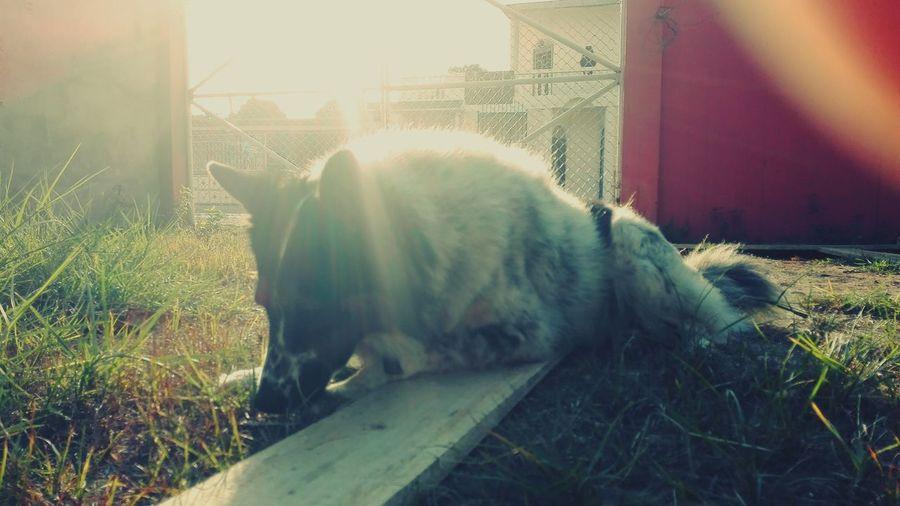 My dog! <3 Dog