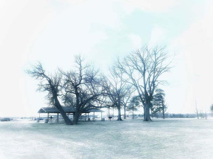Frozen Vignette WarmGlow Iphonephotography Sky Nature Bare Tree Outdoors Tree Tranquility Day Scenics