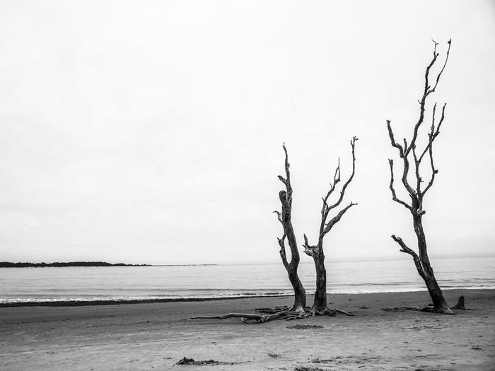 Sky Sea Water Beauty In Nature Tranquility Beach Nature Scenics - Nature Horizon Horizon Over Water Tree Dead Plant Bare Tree Outdoors Cypress Black And White