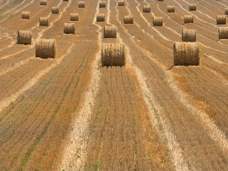 Nature Bale  Land High Angle View Landscape Rural Scene Agriculture Outdoors Environment Farm Shape Industry Agricultural Field Straw Wheat Field Crops Harvesting Cereal Plant Haystack Fresh Plowed Field Summer Countryside Grain Rolled