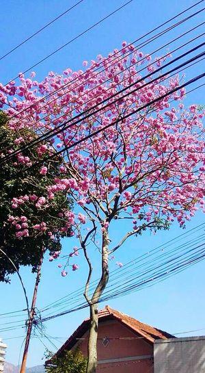 Flores 🌸 Flor Flores Urbanismo And Natureza