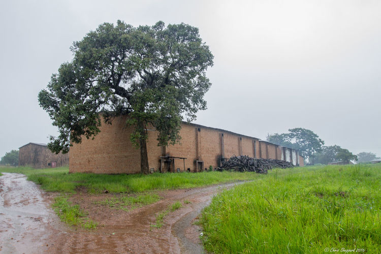 A wet day on a typical Zimbabwean Tobacco Farm Architecture Beauty In Nature Building Exterior Built Structure Day Field Grass Growth Karoi Landscape Nature No People Outdoors Rain Sky Tobacco Barns Tree