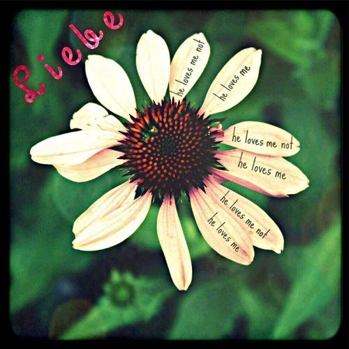 Liebe First Eyeem Photo