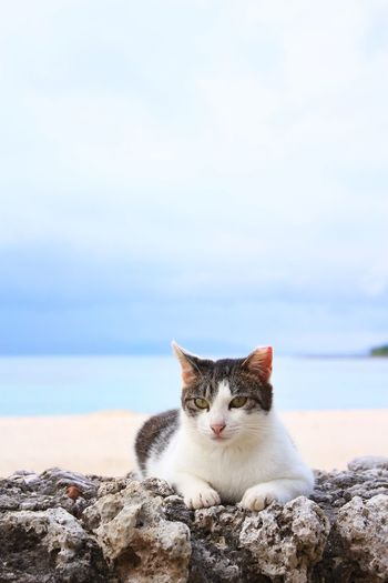 Portrait of cat sitting on rock by sea against sky