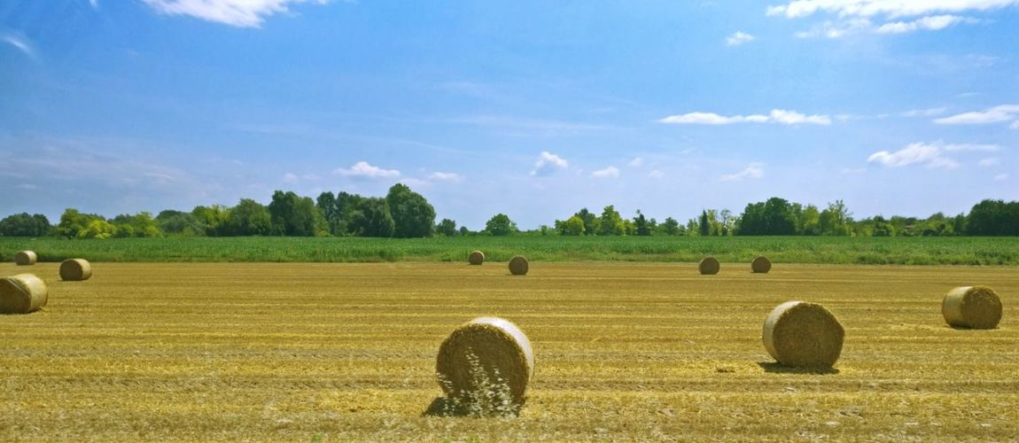 Agriculture Bale  Beauty In Nature Cloud - Sky Day Environment Farm Field Grass Hay Land Landscape Nature No People Outdoors Plant Rural Scene Scenics - Nature Sky Tranquil Scene Tranquility