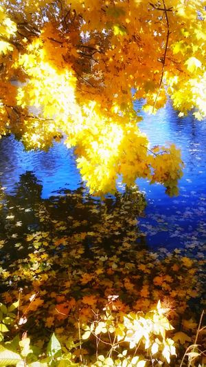 Beauty In Nature Nature Water Tree Backgrounds Gold Colored Colors And Textures Of Nature Beauty In Nature Autumn Leaf Yellow Looking Around ♥