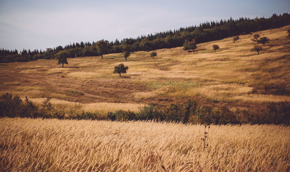 Agriculture Arid Climate Autumn Bale  Crop  43 Golden Moments Colour Of Life Dry Grass Field Field Grass Grassy Green Color Hay Hill Landscape Majestic Meadow Outdoors Remote Rural Scene Tranquil Scene The Great Outdoors With Adobe Trees The Great Outdoors - 2016 EyeEm Awards
