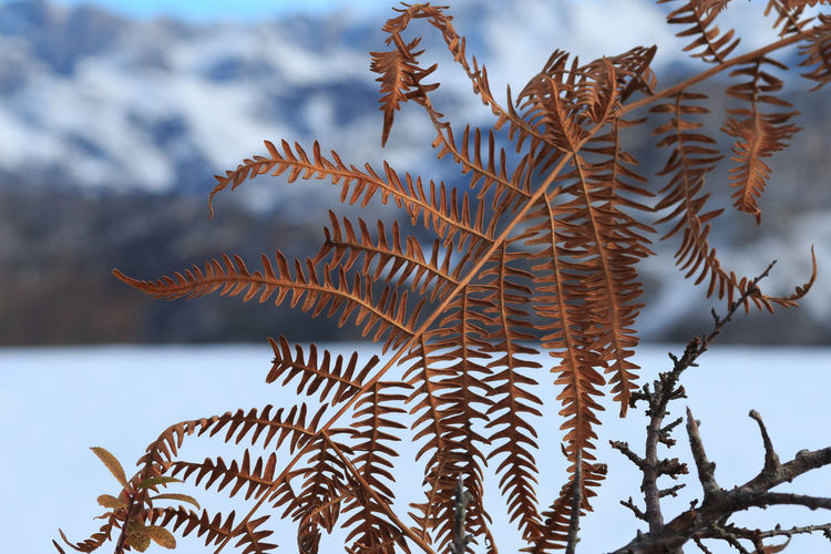 Low angle view of fern during winter