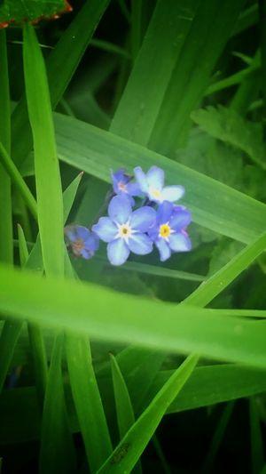 💚💙💚 Nature_collection EyeEm Nature Lover Eyem Nature Eye4photography  Tadaa Community