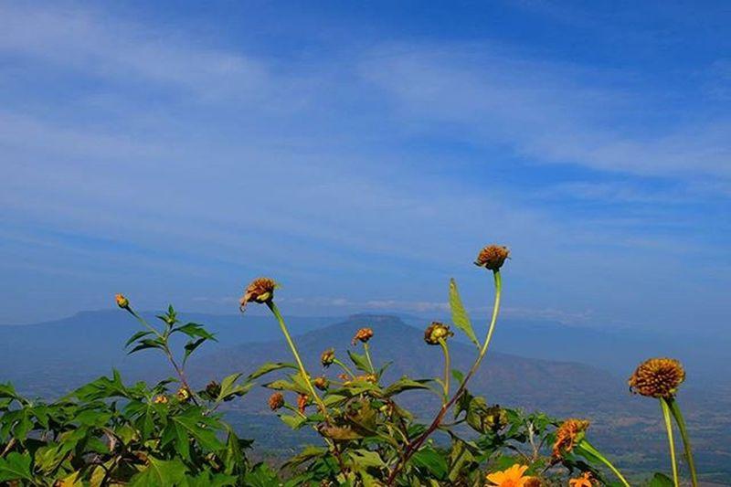 ฟูจิ ฟูจิเมืองเลยยยเจ้าค๊ะะะภูป่าเปาะ บรรลัยทัวร์