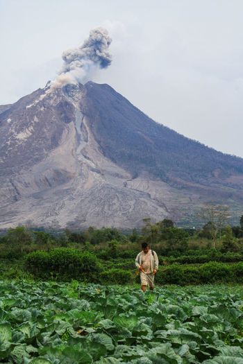 a worker watering vegetables when mount Sinabung eruption Adult Nature Adults Only Agriculture Day One Person Outdoors People Mountain Scenics Men Rural Scene Landscape One Man Only Occupation Only Men Flower Working Beauty In Nature Sky Sinabungeruption EyeEmNewHere Eyeemphoto NorthSumatra