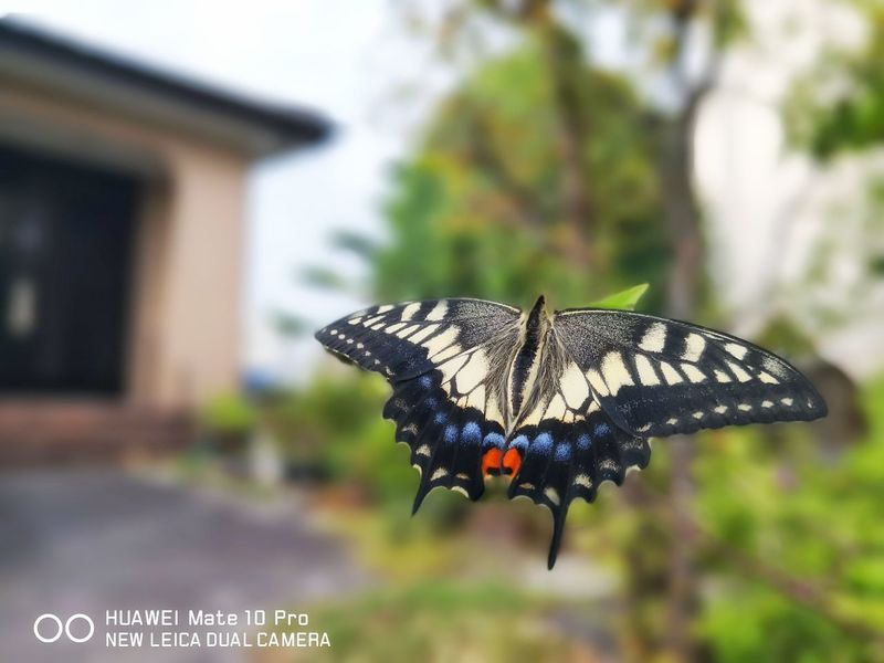 EyeEm EyeEm Best Shots Nature Nature_collection Japan Photography EyeEmNewHere EyeEm Gallery EyeEmBestPics Huaweiphotography Huawei Mate 10 Pro Huaweimate10pro Morning 蝶 Butterfly - Insect Perching Insect Animal Markings Close-up Animal Themes Architecture Butterfly Wild Animal Animal Antenna Spread Wings Animal Wing Blooming Seagull Slug Black-headed Gull Petal
