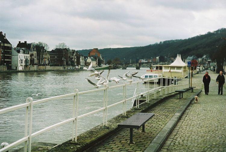 Film Film Photography Water River Belgium Namur Boat Bridge Birds Dog Swallows