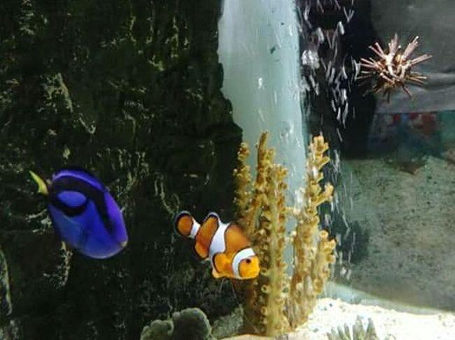 Sea Life Aquarium Bray Aquariumlife Aquarium Life Aquarium Dory Dory ❤ Doryfish Dory Is Chilling Nemo Nemo :) Found Nemo Nemo!!!