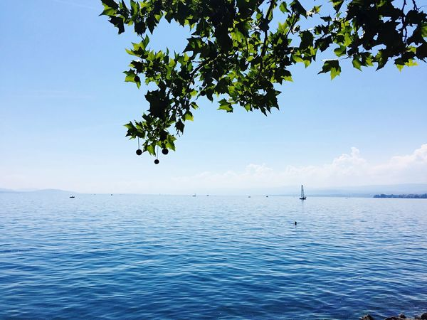 EyeEmNewHere EyeEm Best Shots Switzerland Lausanne Lac Léman Water Sky Tree Sea Beauty In Nature Scenics - Nature Tranquil Scene Tranquility Plant Nature Horizon Horizon Over Water Day Waterfront Idyllic No People Blue Non-urban Scene Branch Outdoors The Traveler - 2018 EyeEm Awards