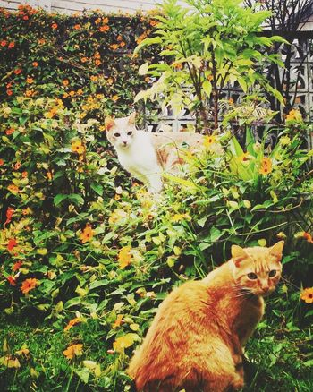 Playing With The Animals Natural Beauty okashi thamara