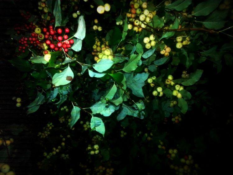 Nightimephotography Appletree Beautiful Nature Fallisalmosthere