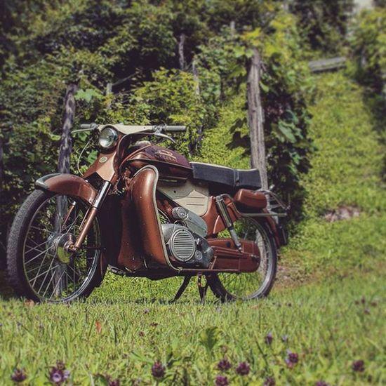 Tomos Colibrí Vintage Oldbike Madeinyugoslavia Restoredbike 1963