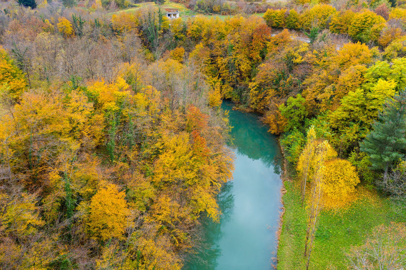High angle view of trees by lake in forest during autumn