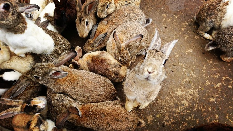 High angle view of rabbits on field