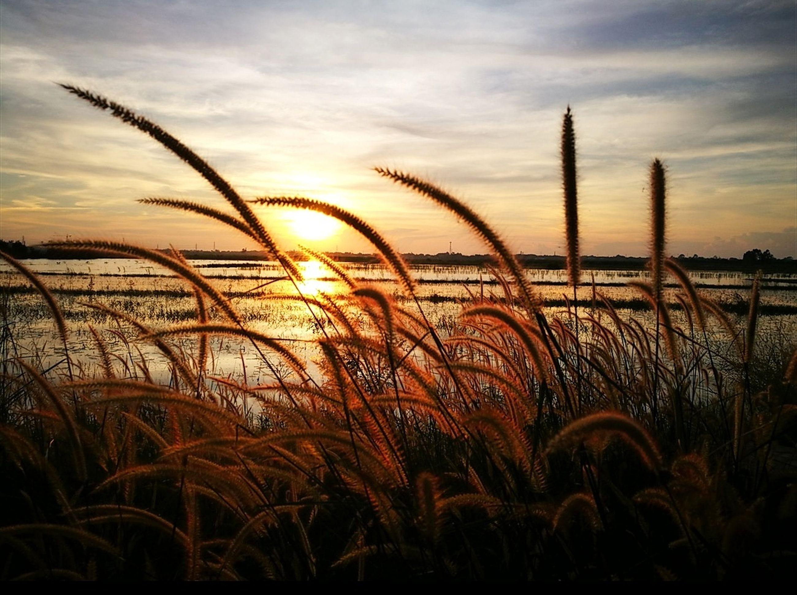 sunset, nature, growth, tranquil scene, beauty in nature, sky, scenics, tranquility, outdoors, cloud - sky, sun, grass, no people, plant, field, silhouette, water, day, close-up