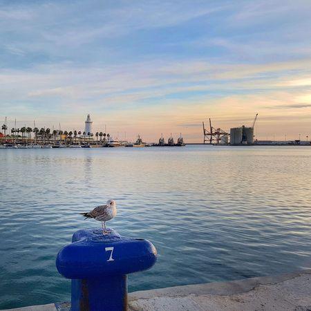 Muelle gaviota atardecer Málaga mar Port Málaga Farola