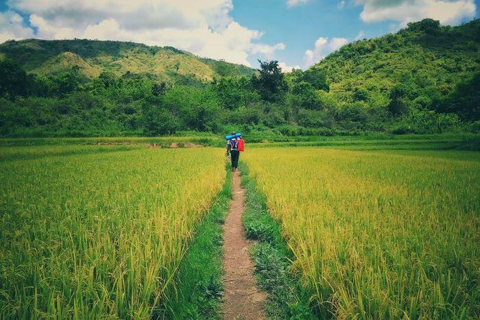 Way to the mountain EyeEm EyeemPhilippines Greens Leading Line Trek Nature Mt. Batolusong Philippines