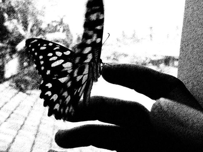 Ruined Butterfly Painting Effect Monochrome Monochrome Photography Still Life Black And White B N W Nature Light And Shadow Hello World Abstract Gift By Nature EyeEm Nature Lover Quiet Moments Close Up Open Edit Welcome To Black Art Is Everywhere