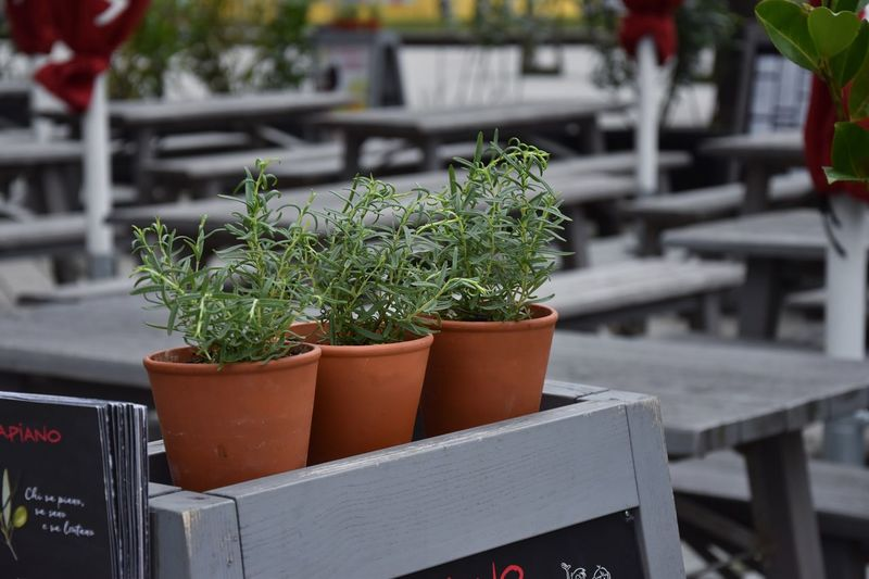 plants are friends EyeEm Selects Potted Plant Growth Plant Table Focus On Foreground No People Nature Day Outdoors Greenhouse Close-up Freshness