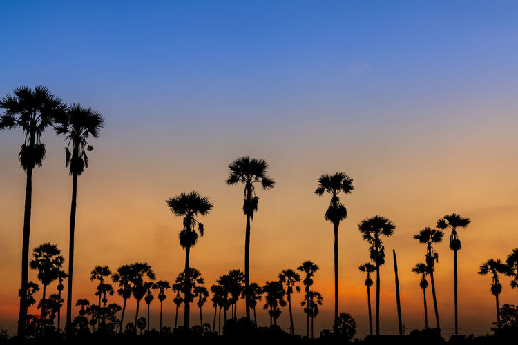 Sky Palm Tree Tree Plant Sunset Nature Orange Color Tall - High No People Beauty In Nature