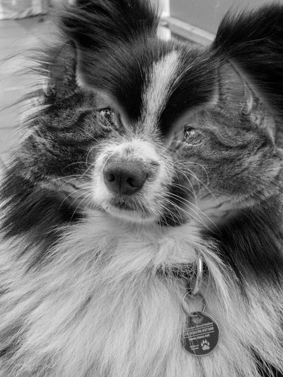 Pets Dog Cat Dubleexposure