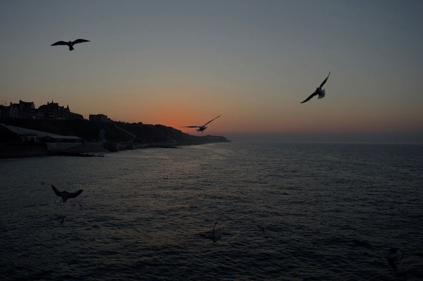 Animal Themes Animal Wildlife Animals In The Wild Avian Beauty In Nature Bird Flying Horizon Over Water Medium Group Of Animals Mid-air Nature One Animal Orange Color Scenics Sea Seagull Spread Wings Sunset Tranquil Scene Tranquility Two Animals Water Waterfront Wildlife Zoology