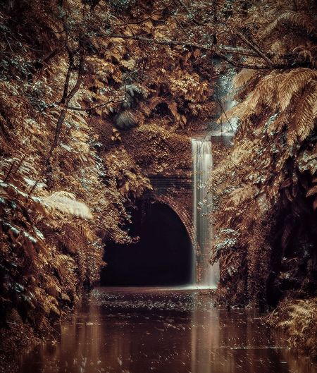 The flooded old Helensburgh train tunnel in New South Wales, Australia. Doesn't it look like a place from a fantasy world? :) Australia Creativity Golden Helensburgh Helensburgh Tunnel New South Wales  Train Tunnel Abandoned Built Structure Flowing Water Nature No People Plant Reflection Sydney Tree Water The Great Outdoors - 2018 EyeEm Awards Capture Tomorrow