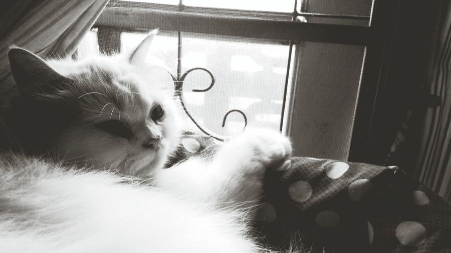 Hey Am Here When You Come Back I Miss U Cat Kitten 🐱 Pet Miss You On Window Waiting ... Animal Photography Black & White
