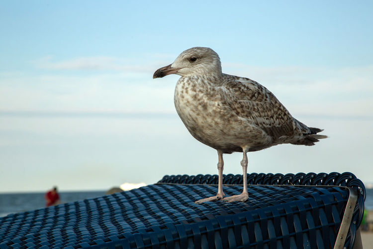 Animal Animal Themes Animal Wildlife Animals In The Wild Bird Close-up Day Focus On Foreground Nature No People One Animal Outdoors Perching Railing Sea Seagull Sky Vertebrate Water