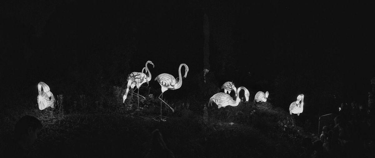 Panoramic view of illuminated artificial flamingoes at zoo