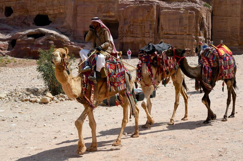 Jordan Mobile Phone Petra Adult Adults Only Ancient Civilization Architecture Built Structure Camel Day Desert Domestic Animals Livestock Mammal Men Multitasking Nature One Man Only Only Men Outdoors People Phonecall Real People Sand