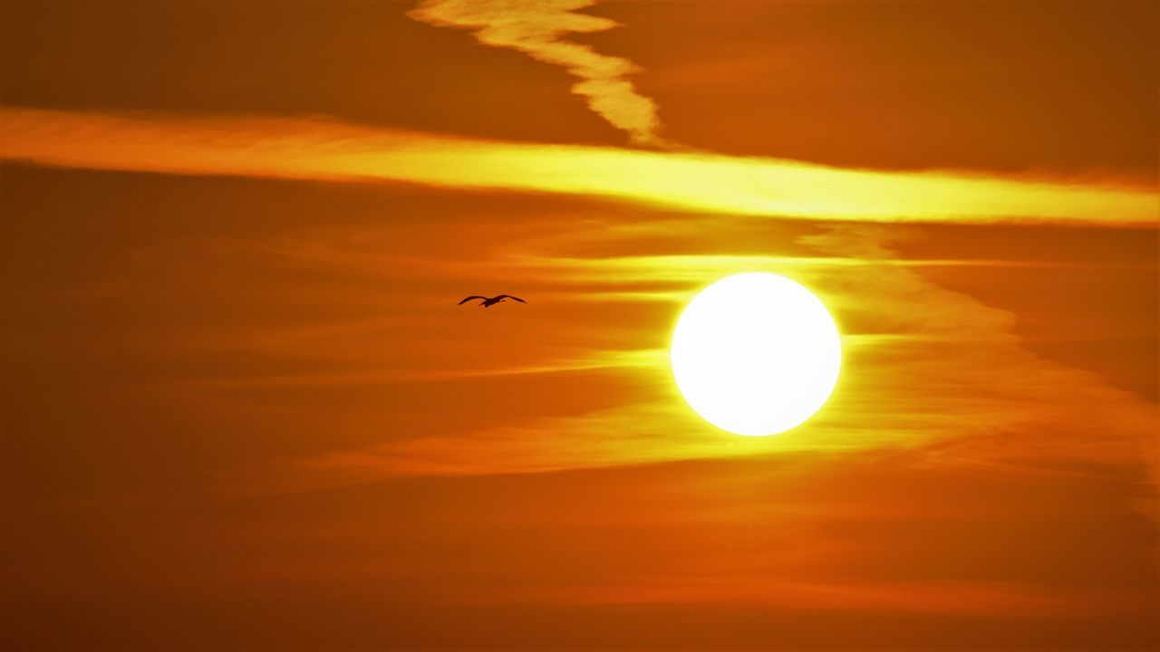 sunset, beauty in nature, sun, orange color, nature, silhouette, scenics, sky, bird, tranquil scene, no people, animal themes, outdoors, animals in the wild, tranquility, cloud - sky, yellow, one animal, sunlight, flying, day