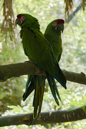 Close-up of parrots perching on branch